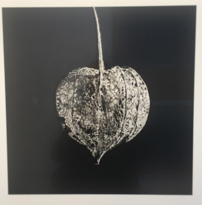 Jean Baptiste Huynh Nature-Amour en cage 2013 Ed.2:12